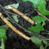DilafruzArticleThumbnailIMG_4032 soil