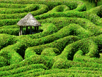 Cornwall Labyrinth Public Domain https://pixabay.com/en/maze-labyrinth-glendurgan-garden-511153/