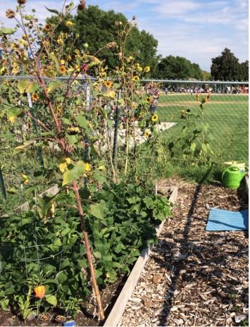 Figure 2. Hillcrest School Garden